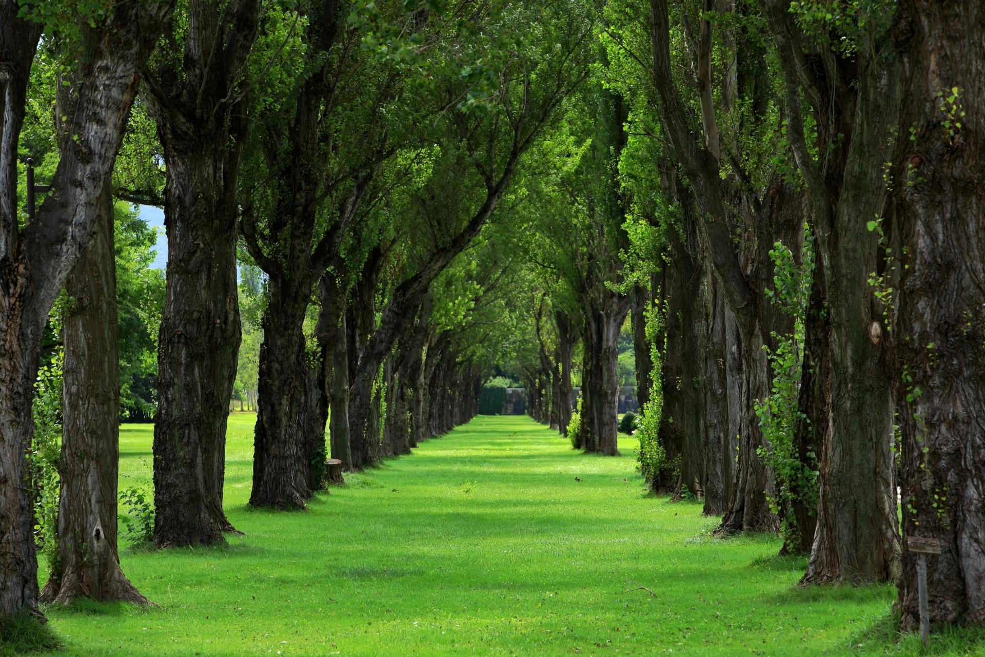 ポプラ並木の幻想的な景色